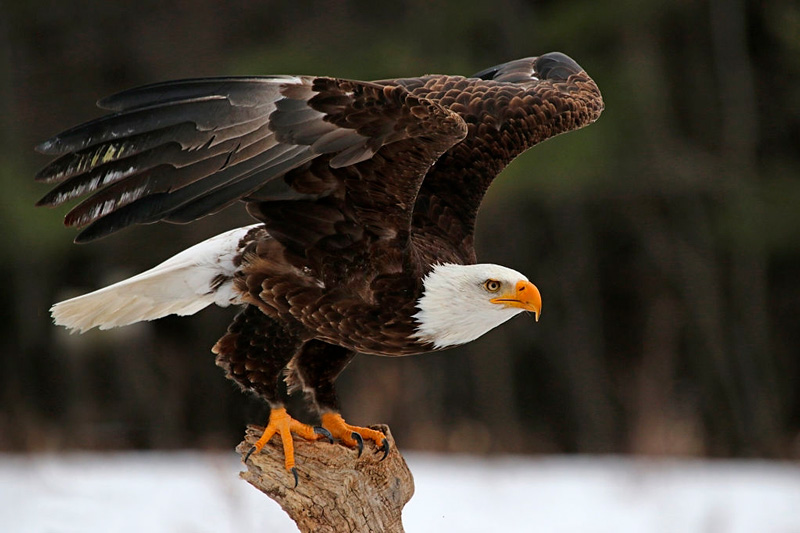 Ogunda la masa: Aguila de Ifa